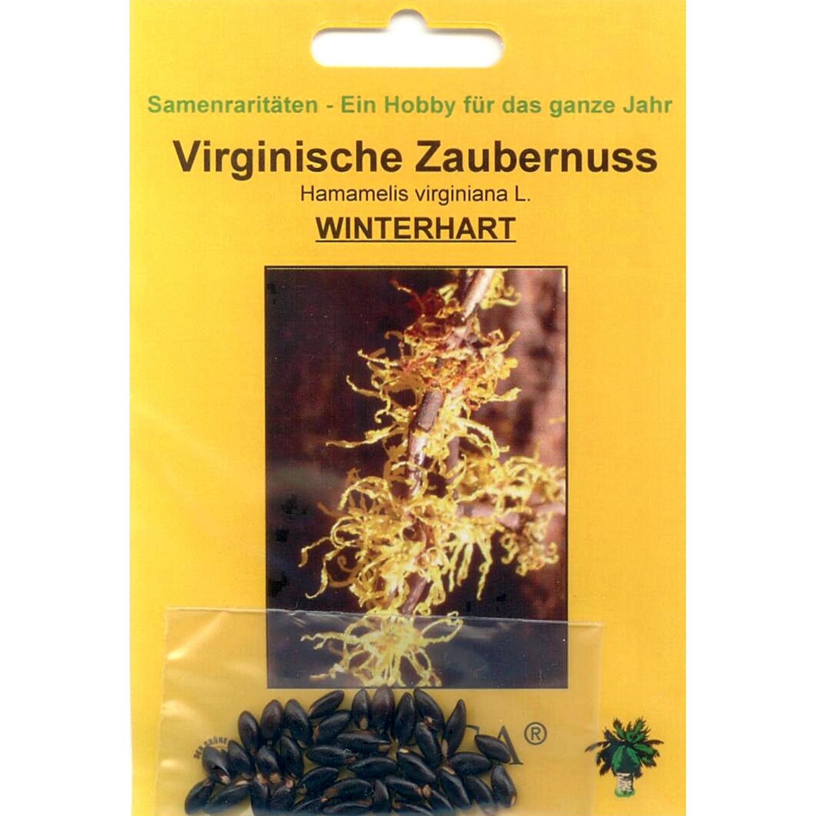 90083 25 Samen von  Hamamelis virginiana L. Bonsai Virginische Zaubernuss
