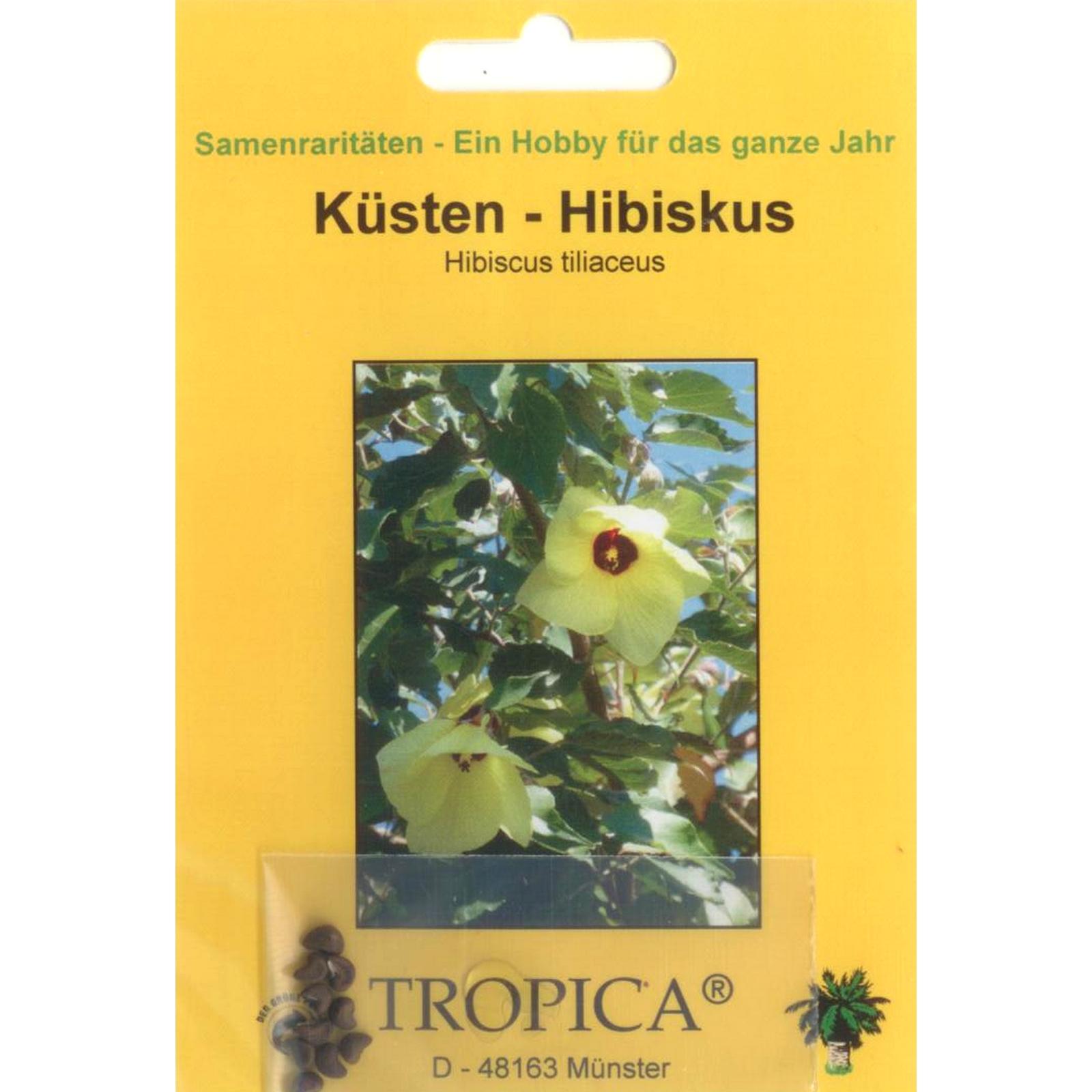 Hibiscus tiliaceus 90053 Küsten-Hibiskus Bonsai 15 Samen v