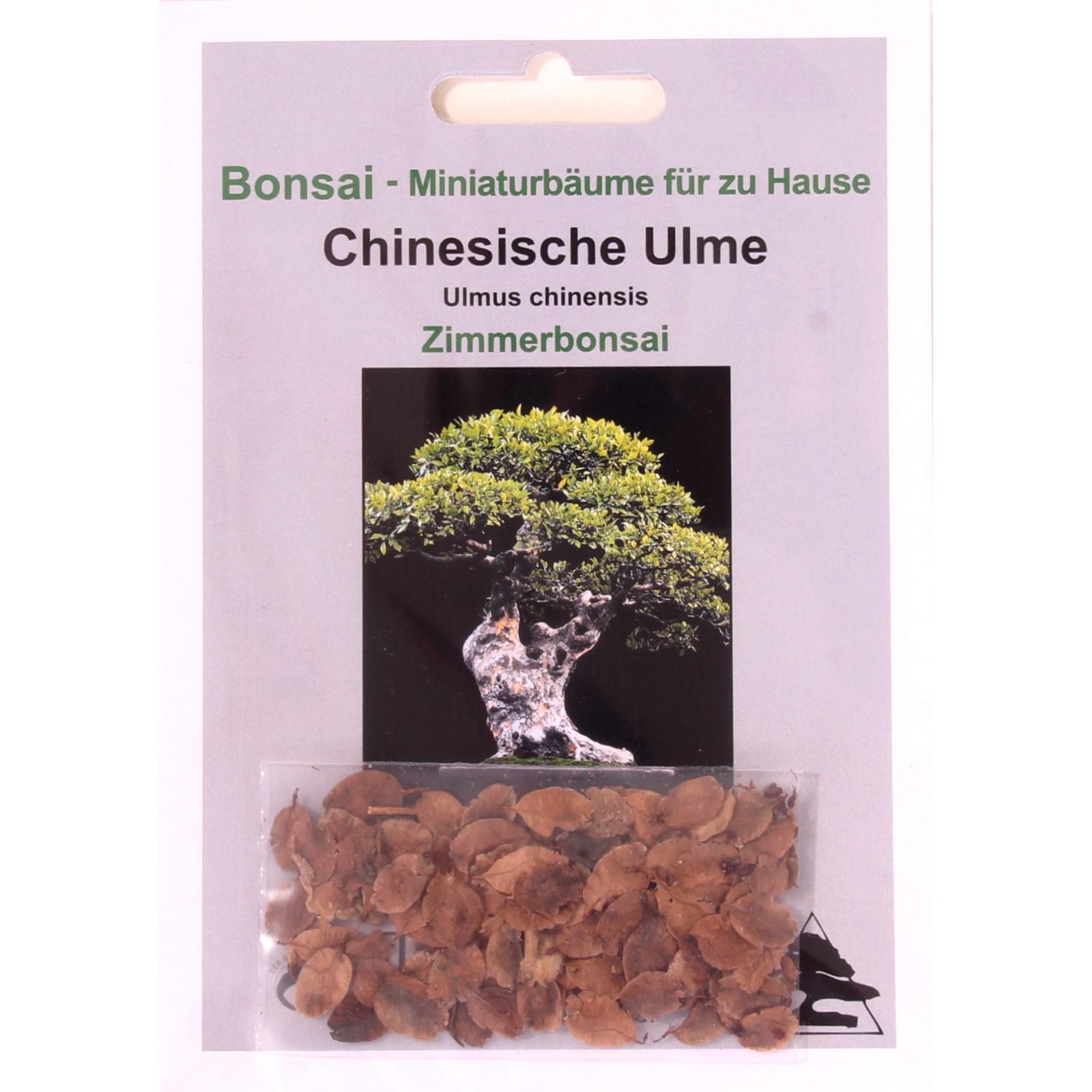 Bonsai-Shopping.eu - 30 Samen Chinesische Ulme, Ulmus parviflora