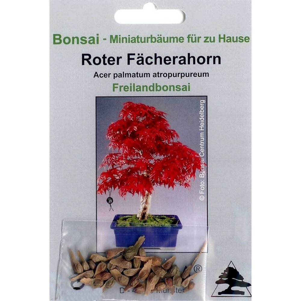 bonsai 20 samen acer palmatum atropurpureum roter f cherahorn 90001 ebay. Black Bedroom Furniture Sets. Home Design Ideas