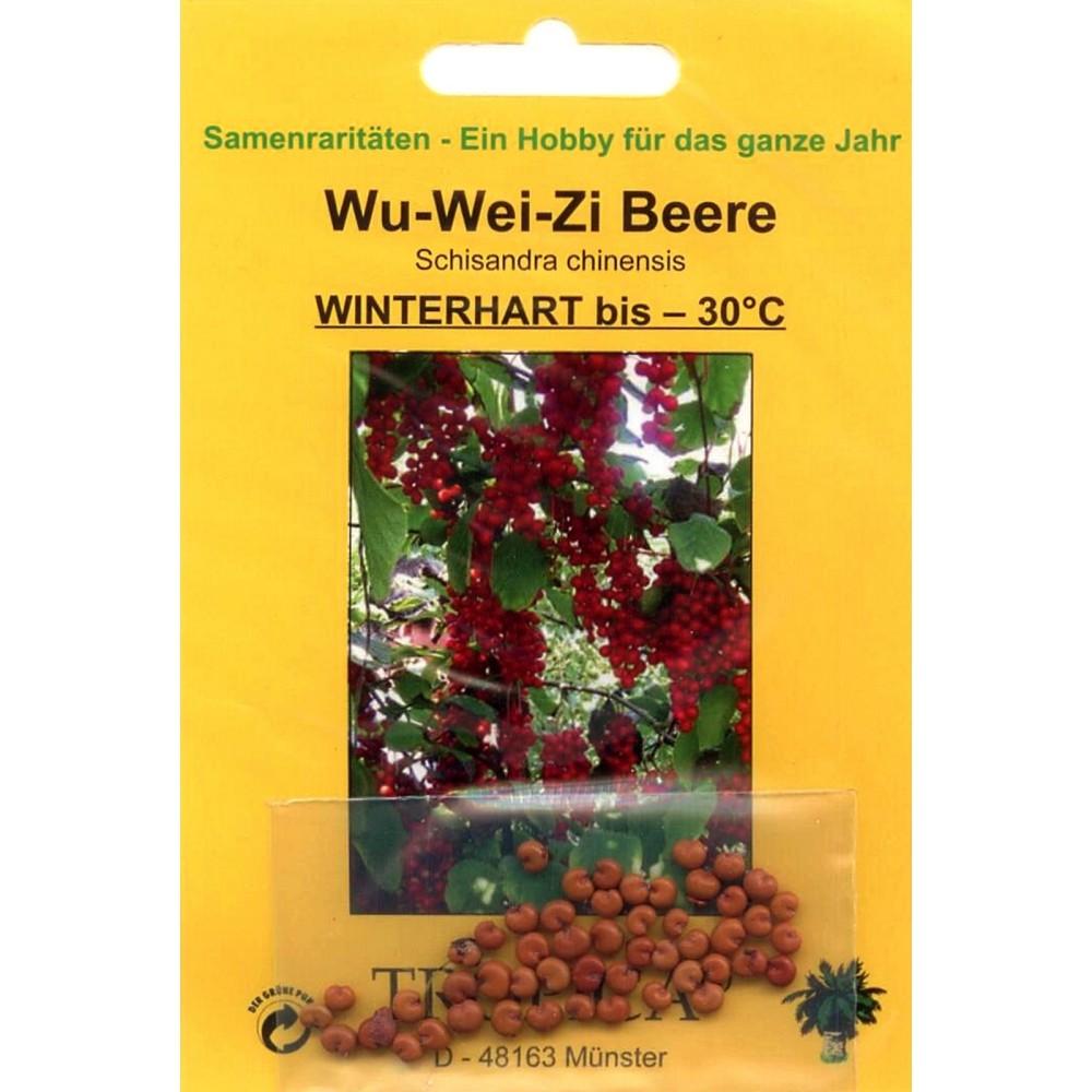 bonsai 30 samen von schisandra chinensis wu wei zi beere 90081 ebay. Black Bedroom Furniture Sets. Home Design Ideas