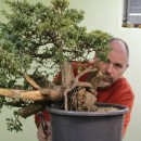 Individueller Bonsai-Workshop